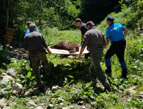 Bear relocated from urban area